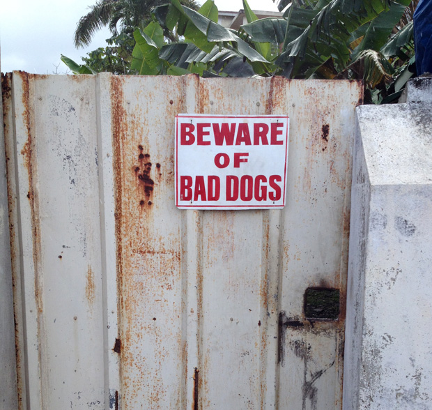 bad_dogs_web