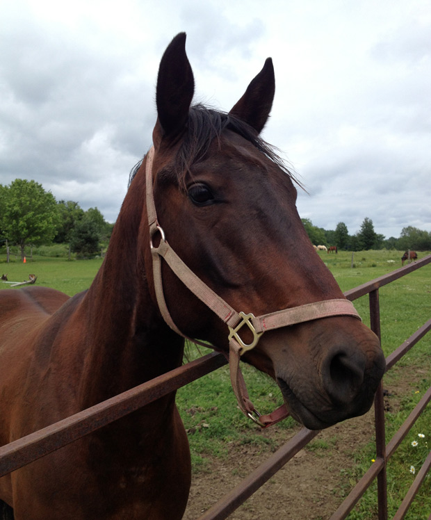 horsehead_web