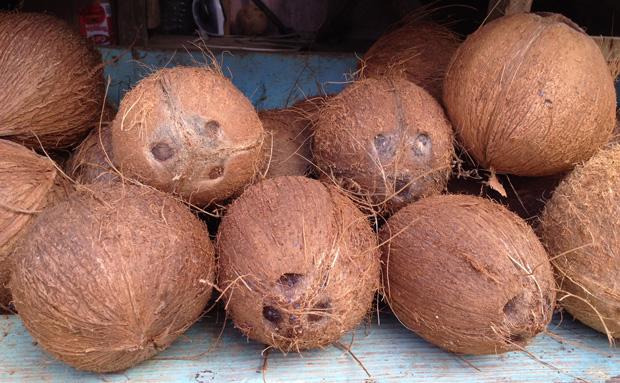 coconuts_web
